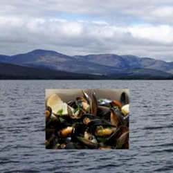 Mussel Farming in Kenmare Bay